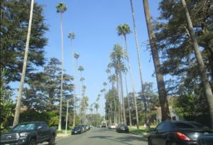 Palmbomen Beverly Hills